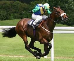 racepaarden